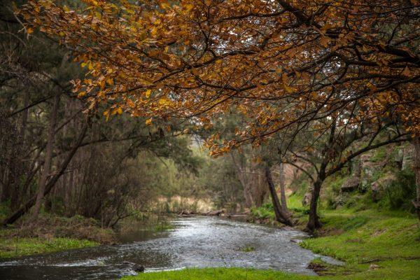 Riverlea Retreat Mudgee River-2
